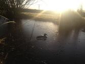 winter sunrise on the pond